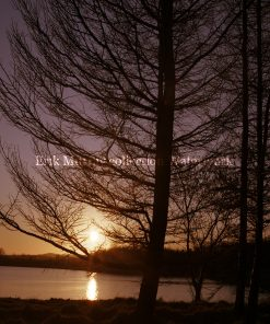 Blessington lakes Tree 1 Co. Wicklow