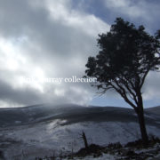 Wicklow Snow 2010 Tree 2 no boarder