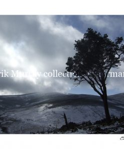 Wicklow Snow 2010 Tree 2 with boarder & signature