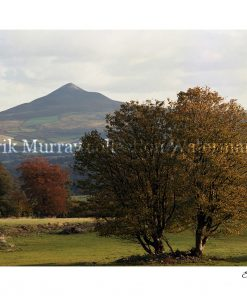 Wicklow Sugarloaf 1983 (Image 2) with boarder & signature
