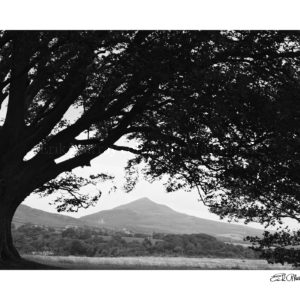 sugar loaf 1983 B & W boarder & signature