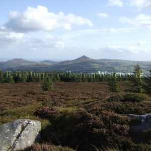 Wicklow Mountains (Image 4) no boarder